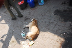 Dogs Snarl Bark Bite But Are Not Racists by firoze shakir photographerno1