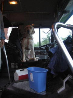 Miguel, Mike May's guide dog, jumps into the driver seat in the bus