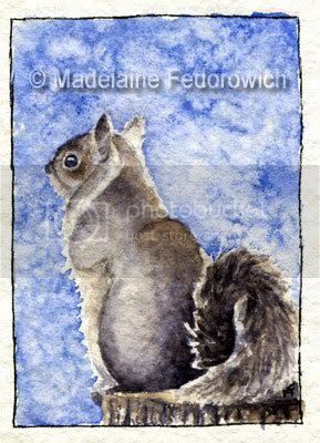 Snowy Squirrel ACEO