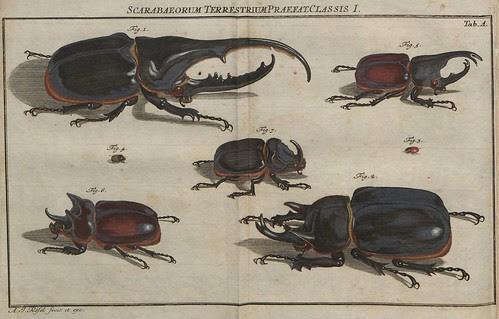Scarabaeorum terrestrium praefat Classis I V.4