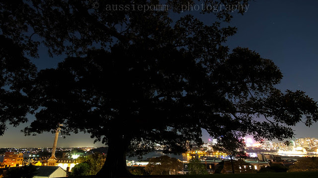Observatory Hill Tree