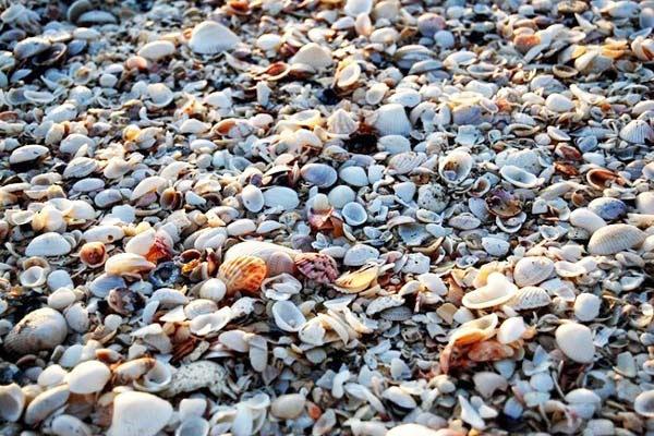 http://perierga.gr/wp-content/uploads/2012/08/shellbeach8.jpg