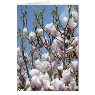 Magnolia Blossom In Spring Greeting Cards