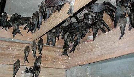 52 Gambar Air Liur Burung Walet Kekinian