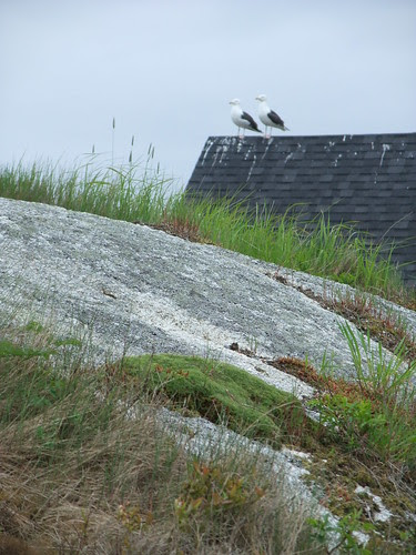 pair of gulls, Peggy's Cove