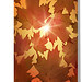 #Autumn #Leaves #Fall #Season #Stationery / #Greeting #Cards