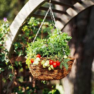tomates en cesta