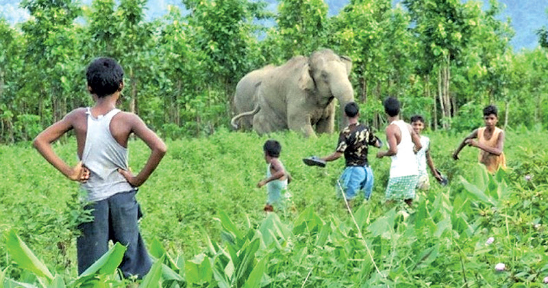 Separate insurance scheme for jumbo crop damages mooted
