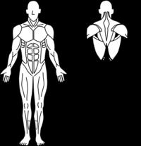 ココ カラ リセット ありのままの自分で 毎日ワクワク全力で楽しむためのエッセンス なぜ 体幹トレーニングをしても痩せないのか