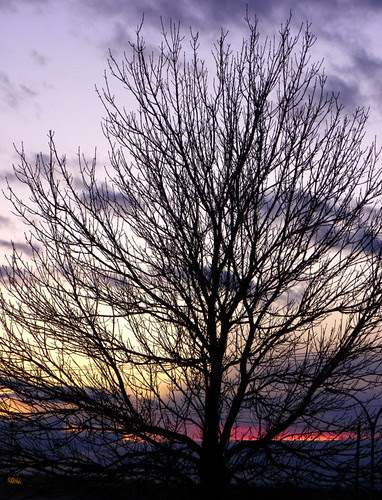 Just Another Slumbering Tree