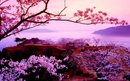 Sakura Tree Flowers Nature Background Wallpapers On Desktop Nexus Image 1724503