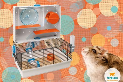 The dwarf Roborovski hamster: characteristics and needs   LOVE FERPLAST