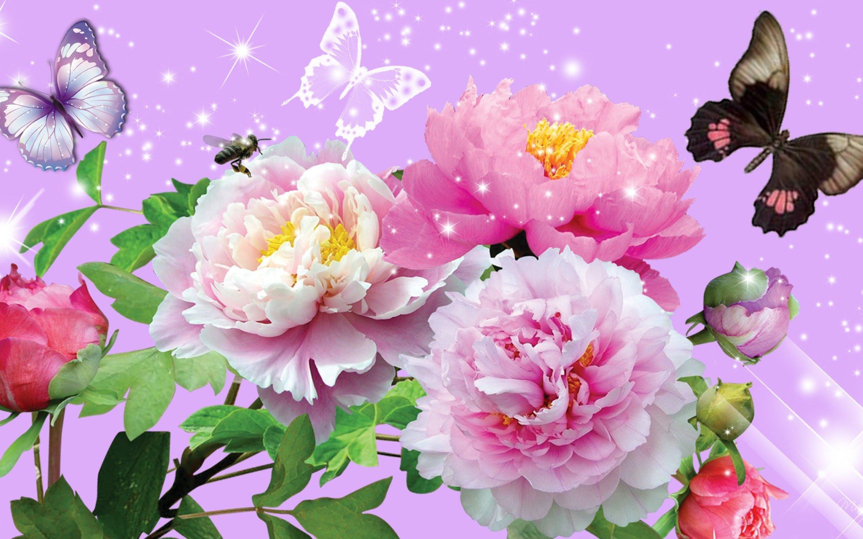 Bright Floral Background Free Download   PixelsTalk.Net