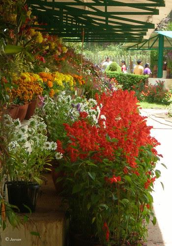 Flowers show in Ooty Botanical Garden