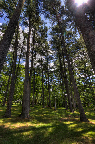 High Forest - Trois-Rivieres