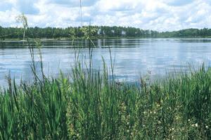 Peering through the weeds at a warm freshwater lake.