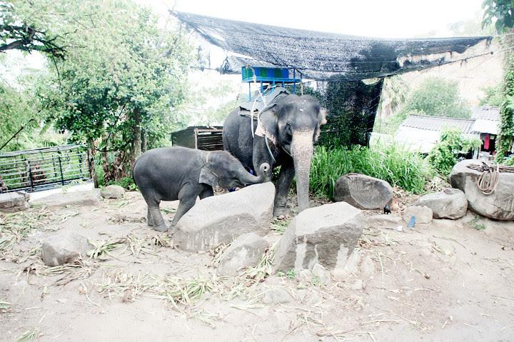 phuket elephant riding typicalben 11