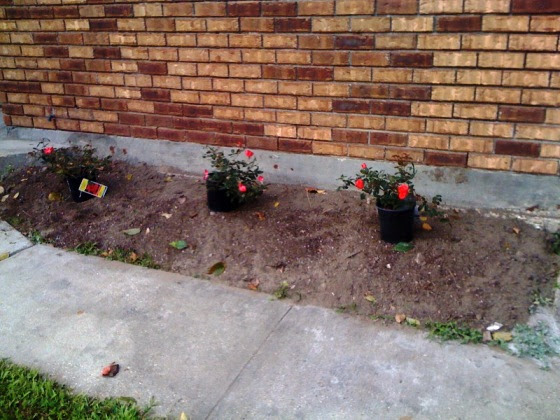 Small Garden Designs With Knockout Roses Pdf
