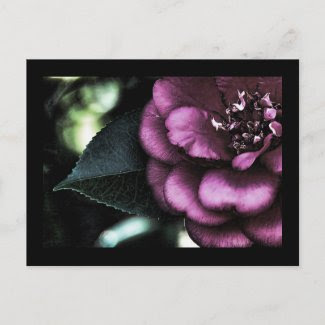 Night Camellia Postcard postcard