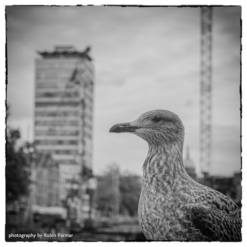 gull observes the collapse of capital
