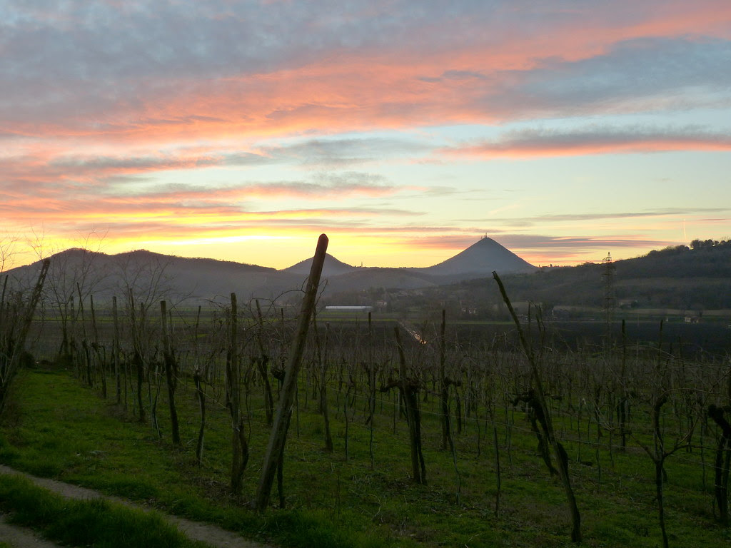 Sunset among the vineyards, Euganean Hills