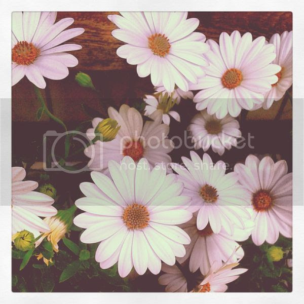photo instagram2_zpsf64086b8.jpg