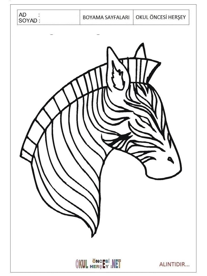 Zebra Boyama Sayfaları