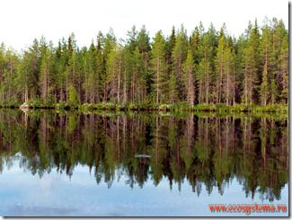Forest   of Unregulated a- & b-Pinene Emitters (Pinus sp.), Finland, near   Local Aquifer!