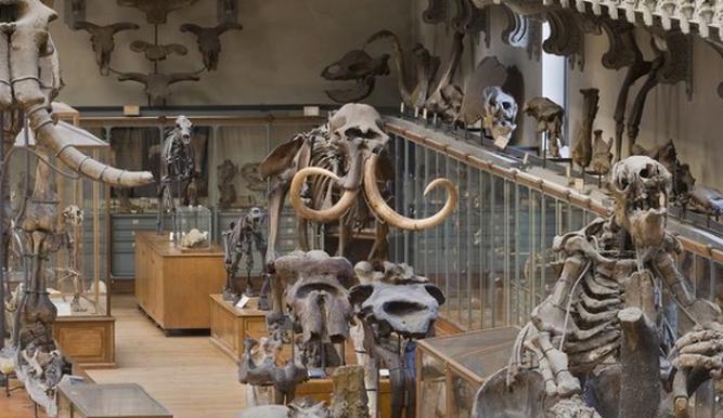 ESPECIES EXTINGUIDAS VUELVEN A LA VIDA EN MUSEO DE HISTORIA NATURAL DE PARÍS