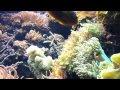 New York Aquarium  - 6.16.12 - 003.mp4