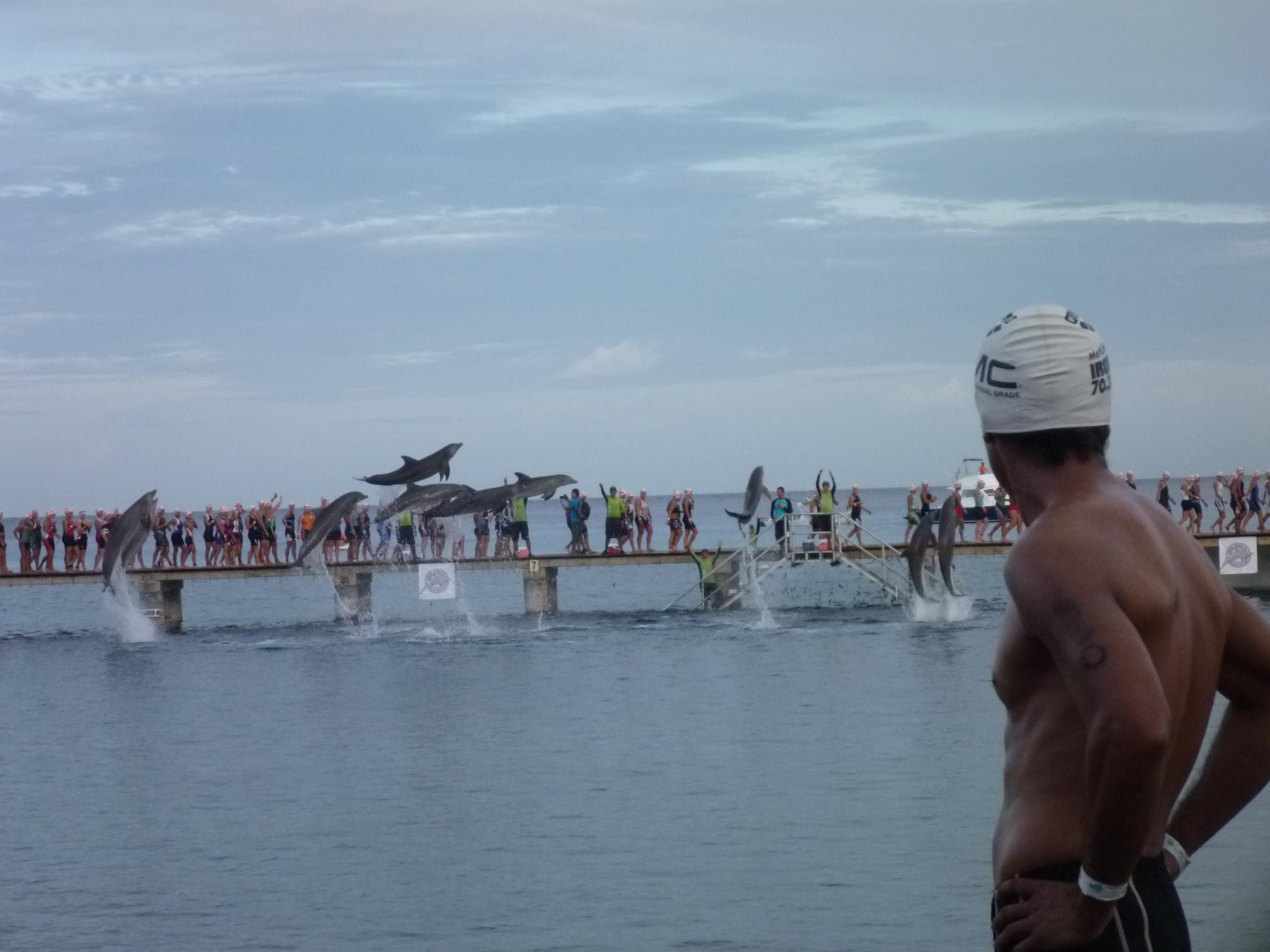 dolphins_ironman_cozumel_2012