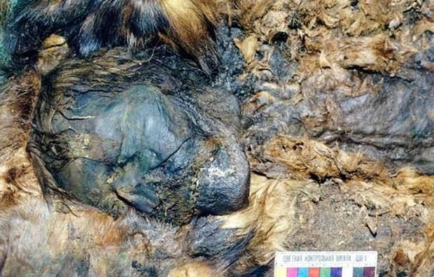 Una de las momias encontradas previamente en la misma zona. Foto: The Siberian Times, Natalya Fyodorova.