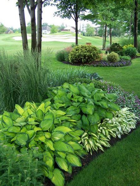 Декоративные травы в дизайне дачного участка