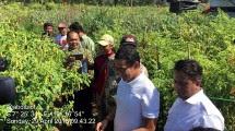 Wagub DKI Sandiaga ke Magelang cek ketersediaan cabai