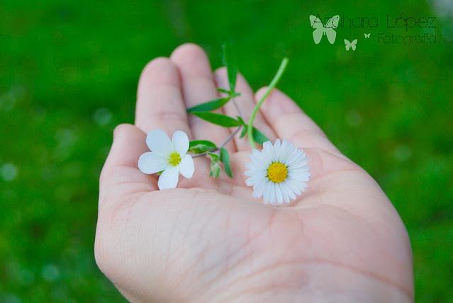 Flores para ti !!!