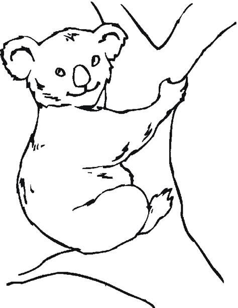 pin  thegores  australian animals bear coloring