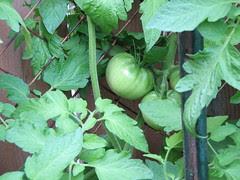 Green Mater