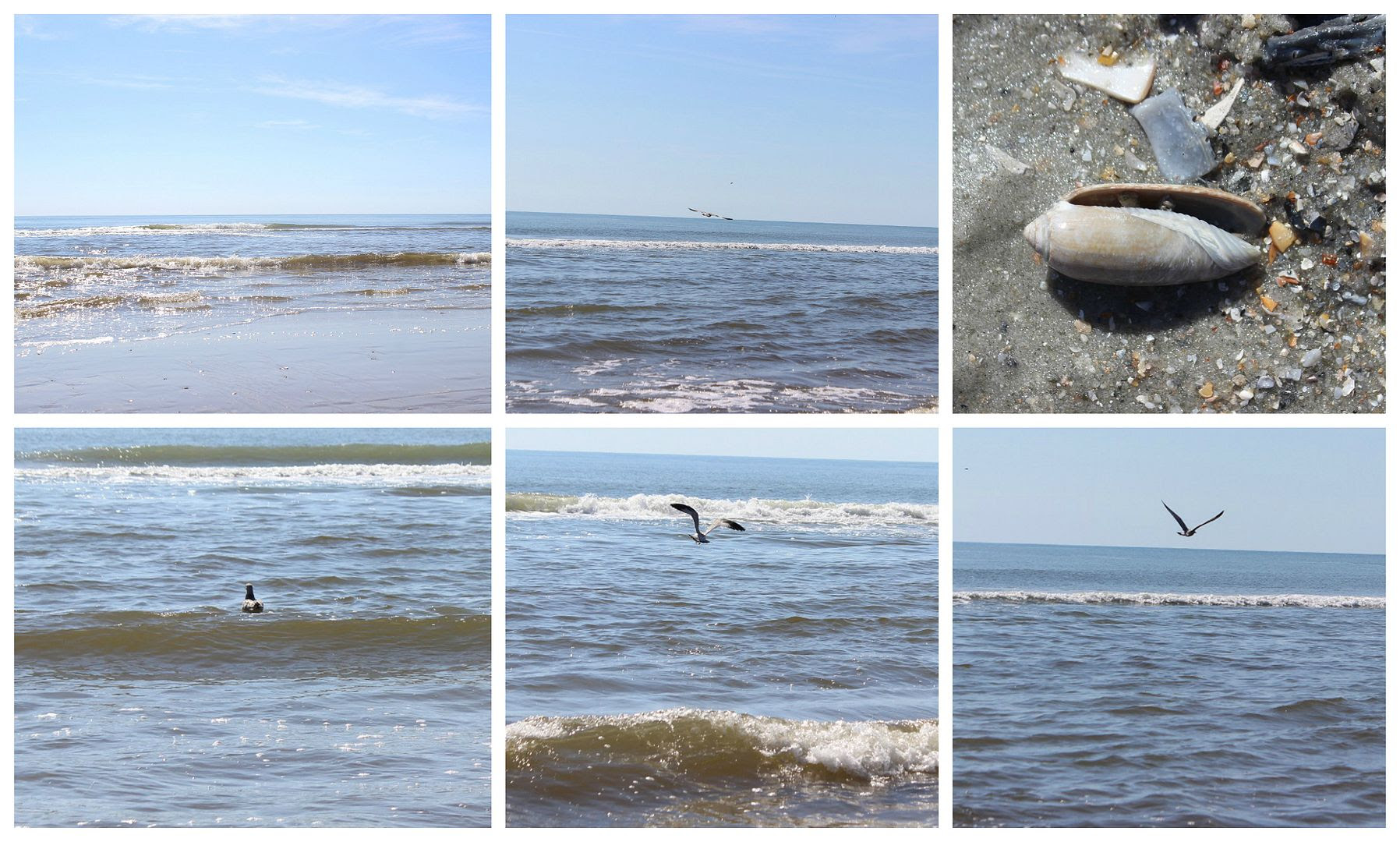 photo beach.collage19_zpsvpfozjjc.jpg