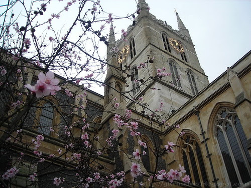 Bloomy almond tree at Southwark Cathedral