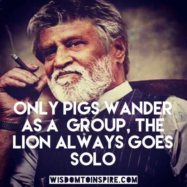 Only Pigs Wander As A Group The Lion Always Goes Solo