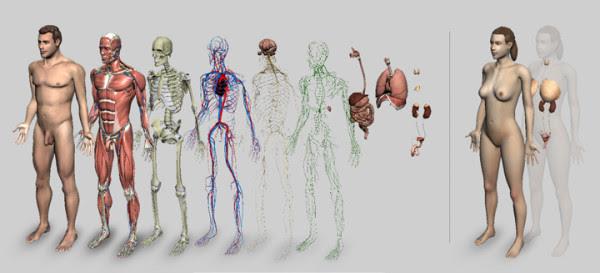 Nas aulas de anatomia humana, dependendo da sua universidade, você poderá estudar o corpo humano de uma forma incrível e única, através da observação e contato com peças reais. Obviamente, se você não quiser, não precisa participar da aula prática.