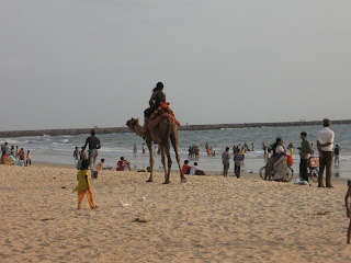 Camel ride at Panambur beach, Mangalore