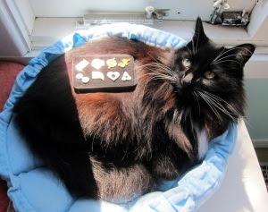 sunny-hoenn-cat1