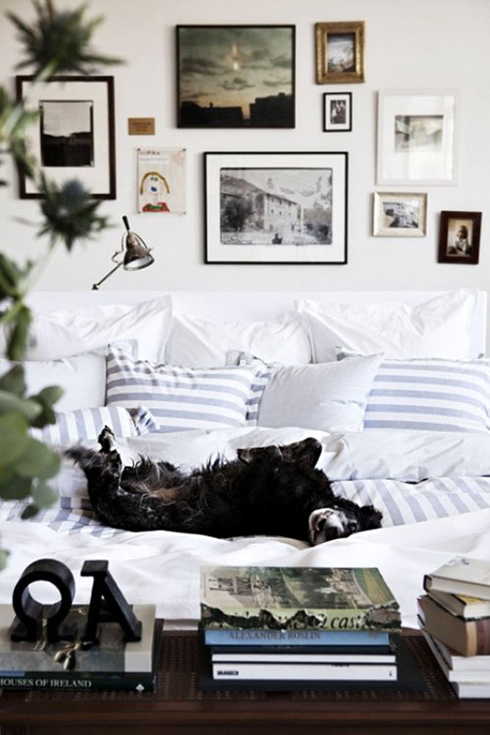 dog on bed 2