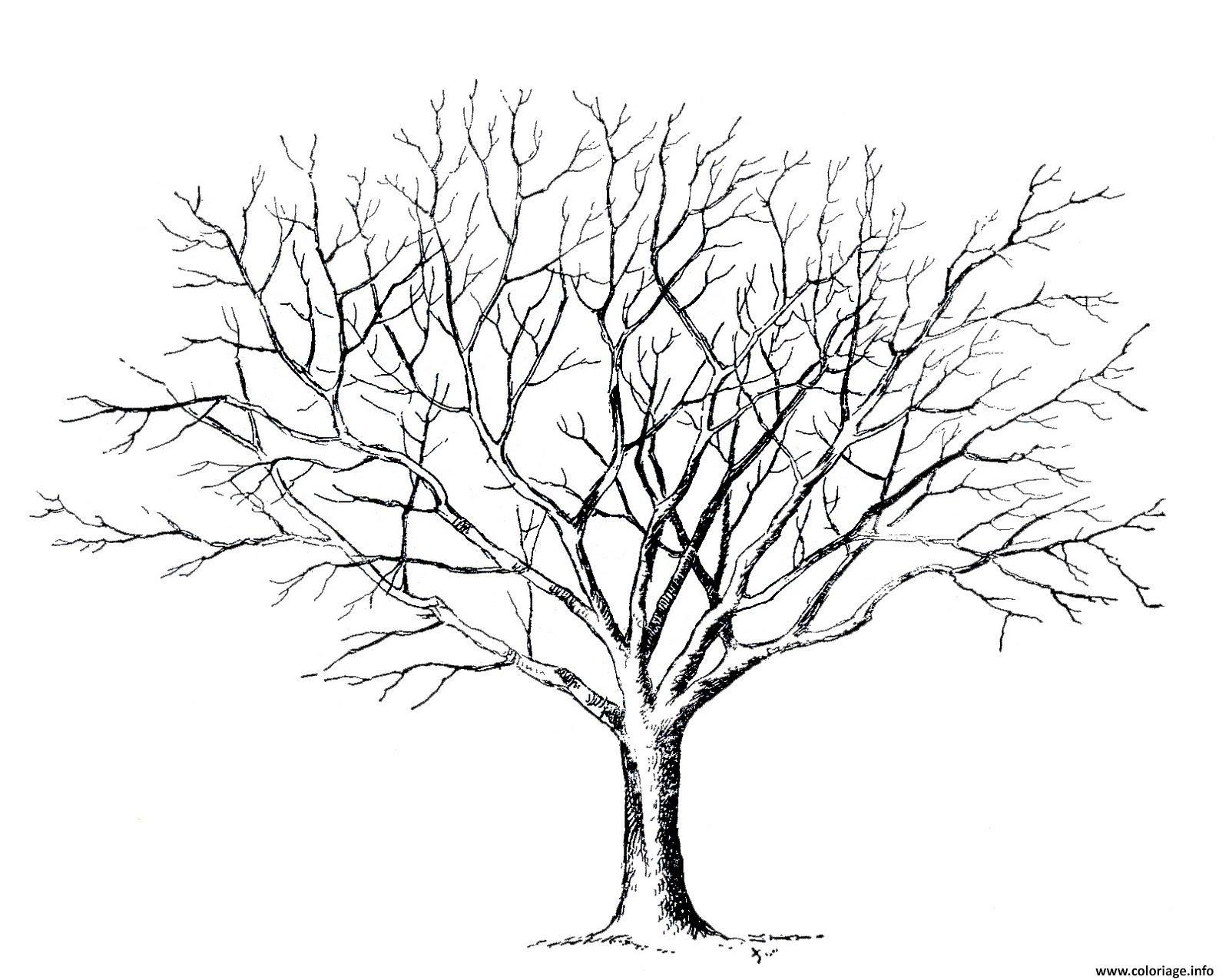 Coloriage arbre 96