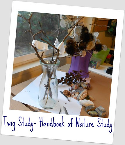Twigs in a Vase - Beginning our Twig Study