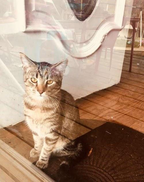 Tras un oscuro pasado, un tímido gato cambia por completo al conocer a una gatita rescatada