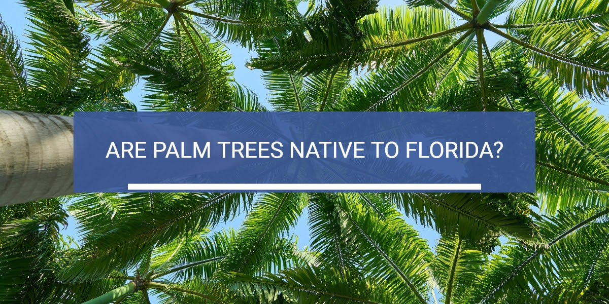 Are Palm Trees Native To Florida Westcoast Landscape And Lawns