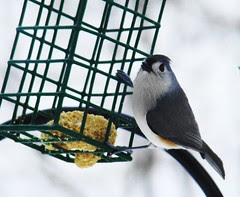 Hey lady we are running low on the suet here