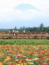 山中湖の富士山.jpg